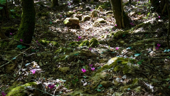 Camminare nei boschi…