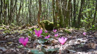 Un'avventura nel Bosco FuoriTempo / PERCORSO AMBIENTE