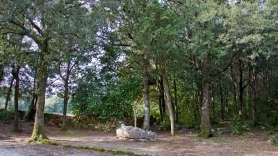 Un'avventura nel Bosco FuoriTempo / PERCORSO STORICO